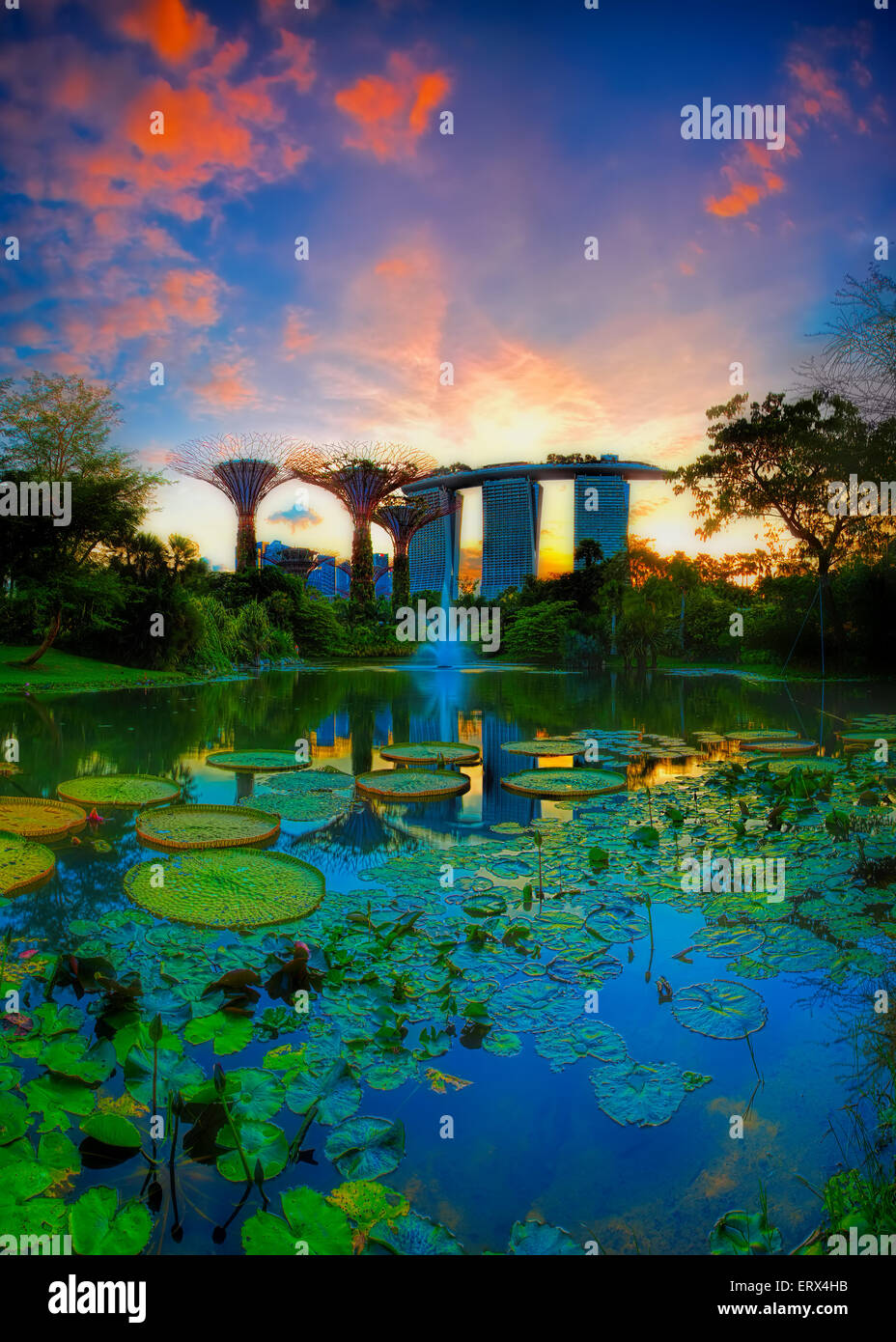 SINGAPORE-JUN 07: Evening view of Water Lily pond, and Marina Bay Sands at Gardens by the Bay on Jun 07, 2015 in - Stock Image