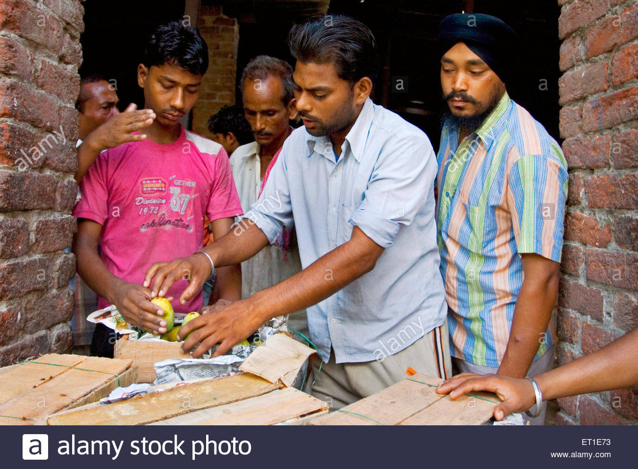 Buyer checking mangoes in Ludhiana vegetable and fruit market ; Punjab ; India - No Model Release - Stock Image