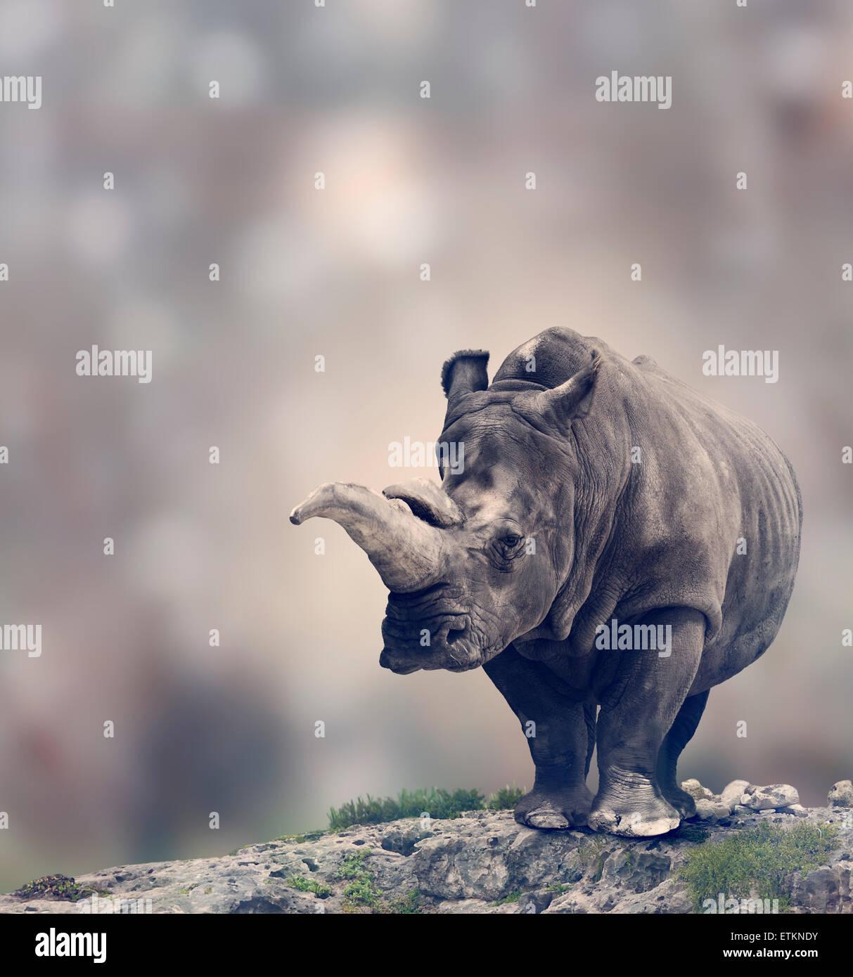 Portrait of Adult White Rhinoceros - Stock Image