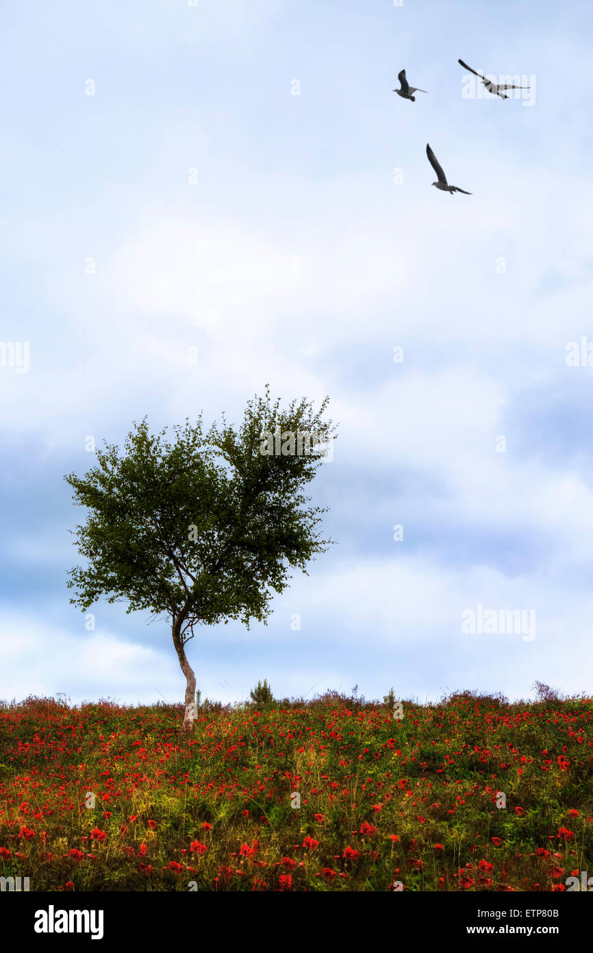 a lonely tree on a meadow with red poppies and three birds - Stock Image