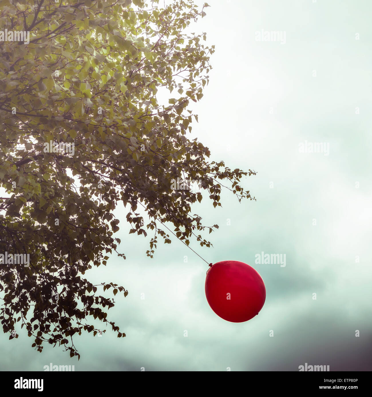 a red balloon hanging on a tree - Stock Image