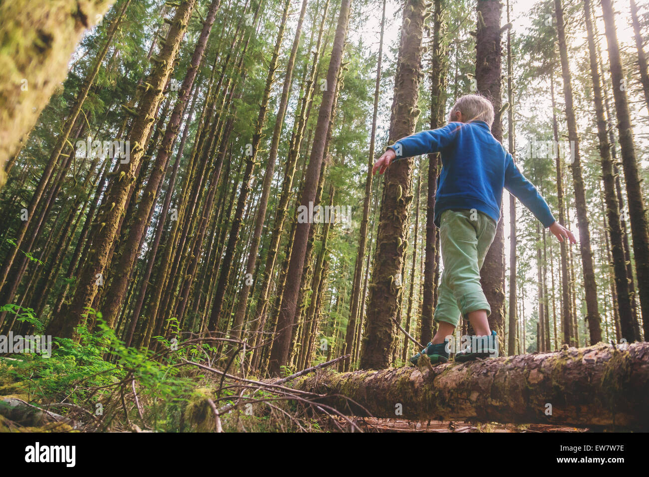 Low angle view of a boy walking across a tree trunk - Stock Image