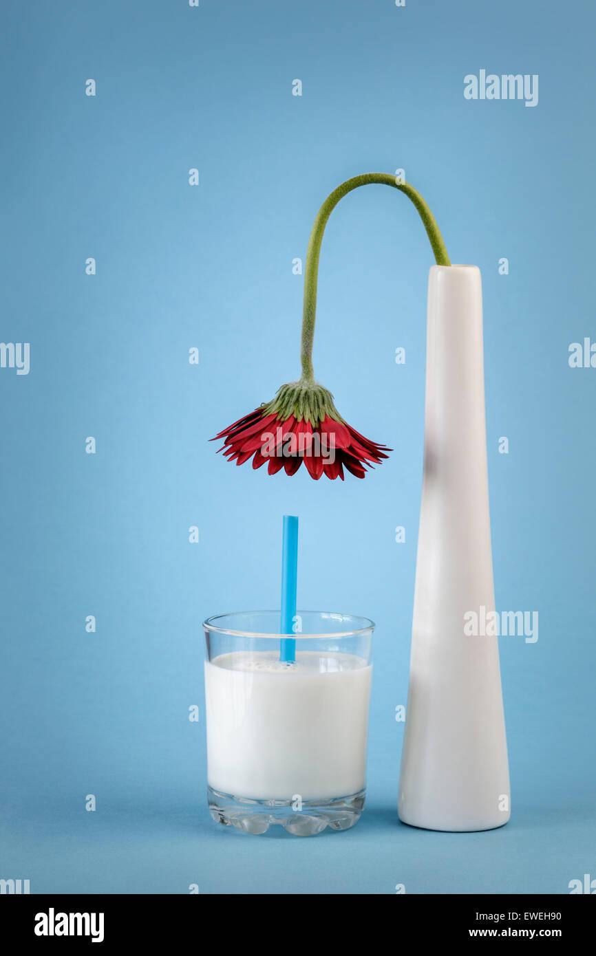 Flower in Vase bending over a glass of Milk - Stock Image