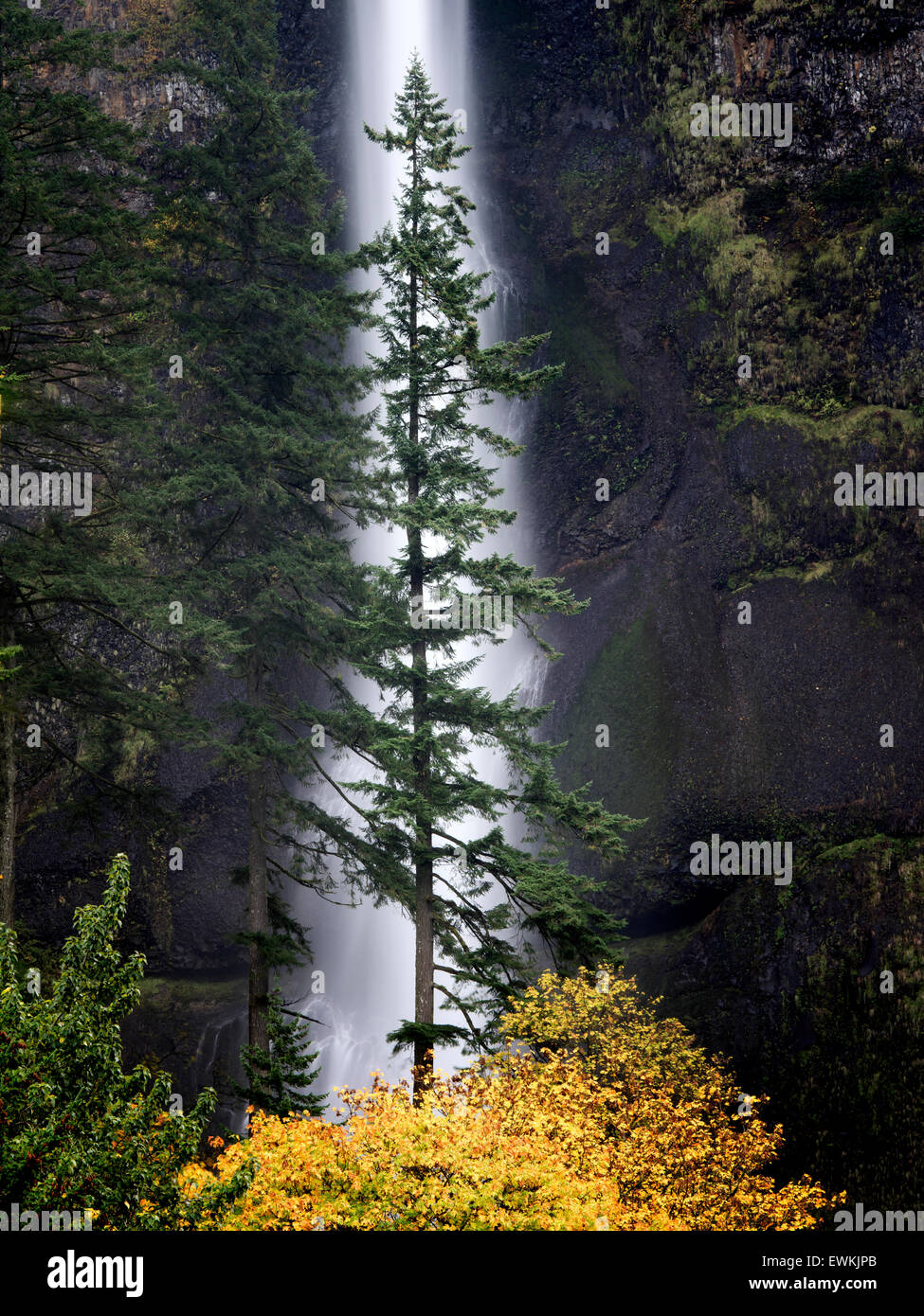 Multnomah Falls with lone tree and fall color. Columbia River Gorge National Scenic Area, Oregon - Stock Image