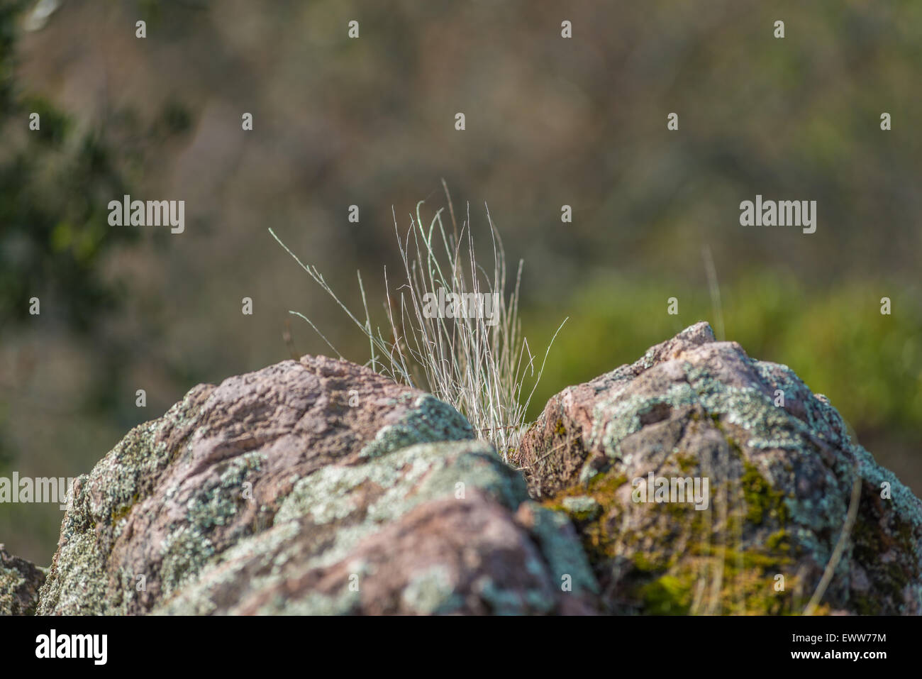 Joining rock formations grass growing in between - Stock Image