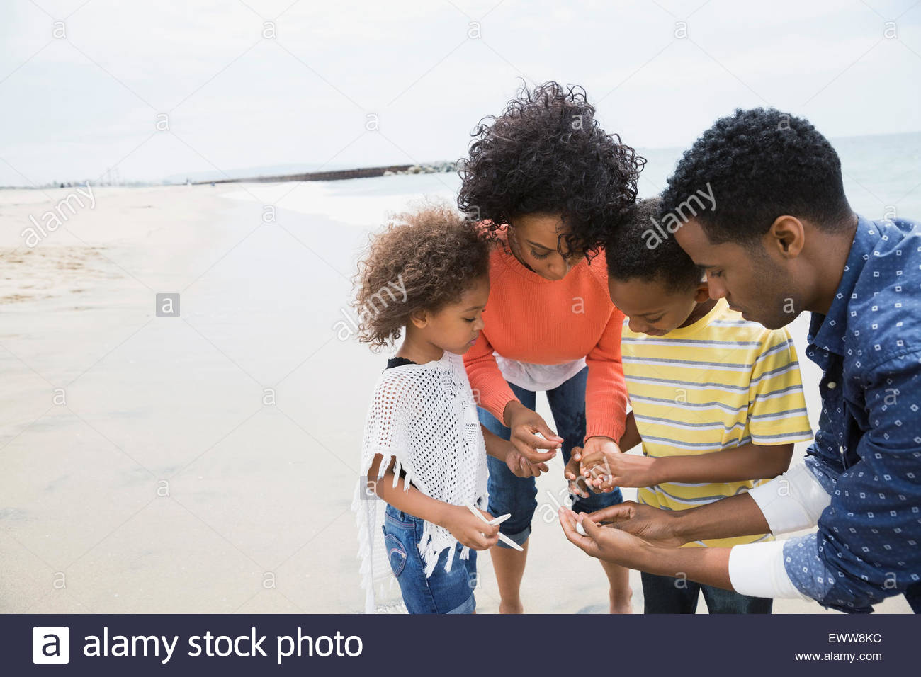 Family gathering seashells on beach - Stock Image