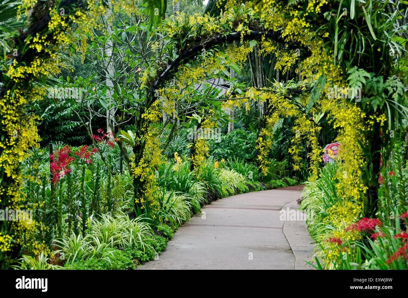 Orchid garden, Singapur City, Singapur, Asia - Stock Image