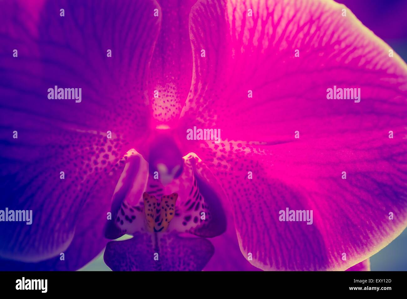 Vintage photo of pink orchid flowers beautiful exotic flower in vintage photo of pink orchid flowers beautiful exotic flower in photo with old fashioned colors izmirmasajfo