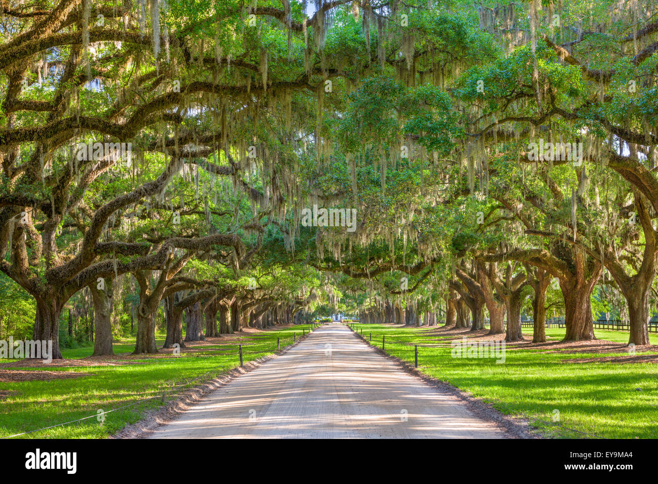 Charleston, South Carolina, USA tree lined plantation entrance. - Stock Image