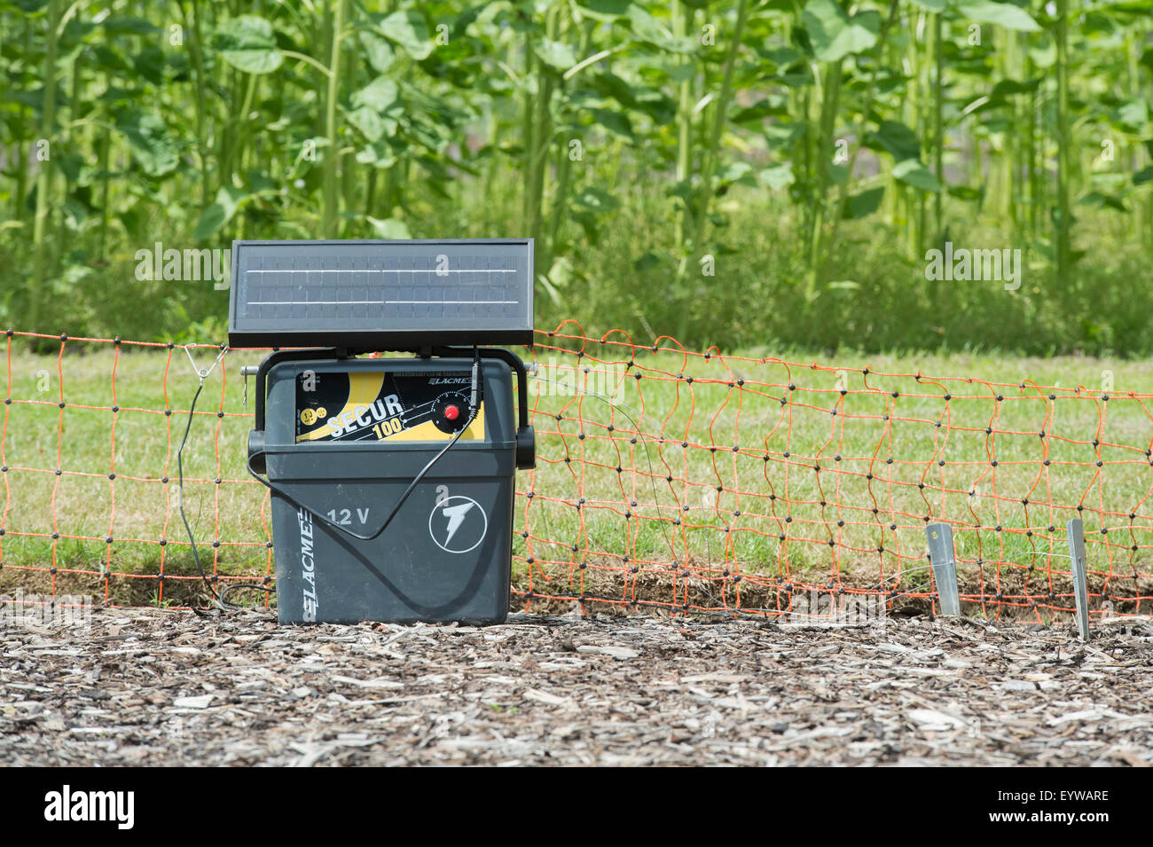 electric fence for garden. Portable Solar Power Battery Unit And Electric Fence Around A Crop Of Maize In The Vegetable Garden At RHS Wisley Gardens. UK For