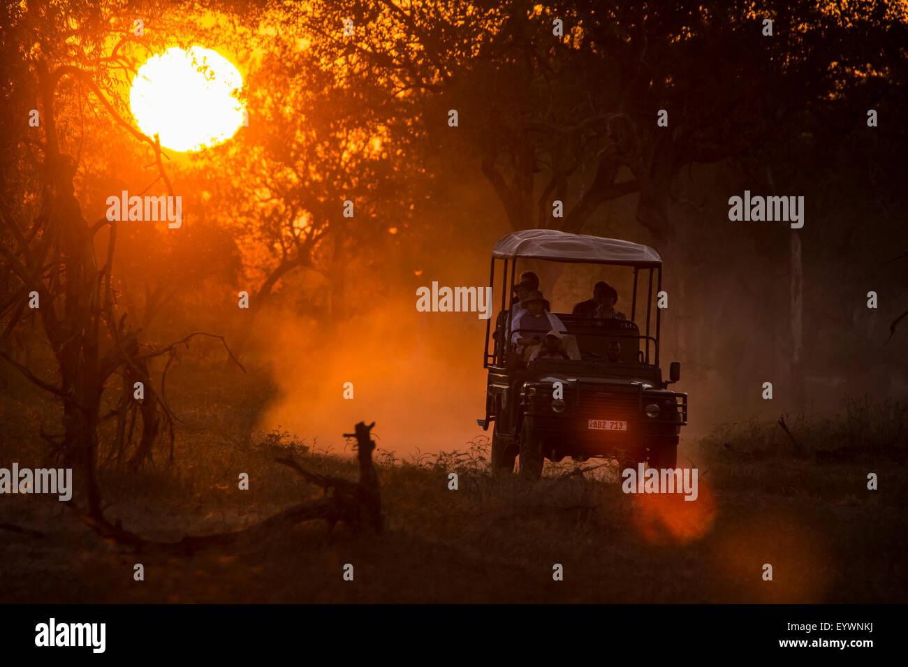 Jeep in backlight at sunset, South Luangwa National Park, Zambia, Africa - Stock Image
