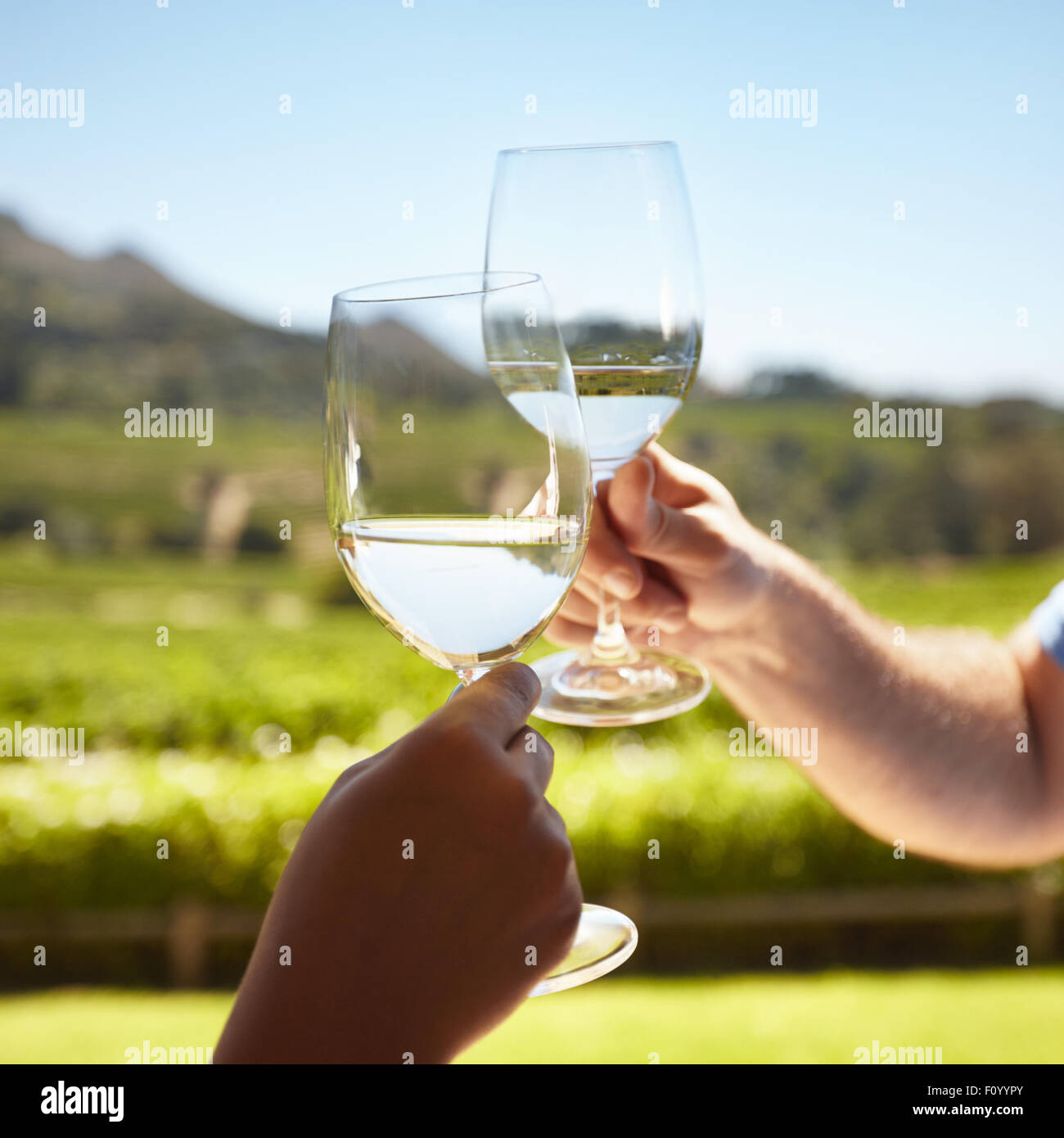 Close up of hands toasting wine outdoors. Celebrating with white wine with vineyard in background. - Stock Image