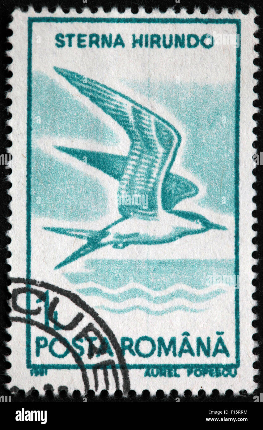 International Post,star,Used and Postmarked,Romania,Romana,Used,and,postmarked,perforated,stamp,Used,and,postmarked,Stamp,post,posting,mail,hobby,perforation,mark,postage,stamp,print,stamp,cancelled,stamp,payment,correspondence,postman,collection,collector,phila,USSR,Soviet,Bloc,Block,East,Eastern,Romainian,Romania,Cure,Gotonysmith,post,posting,mail,hobby,perforation,mark,postage,stamp,print,stamp,cancelled,canceled,stamp,payment,correspondence,postman,collection,collector,philately,philatelist,letter,price,history,retro,Australian,Vintage,delivery,date,relationship,communication,Oz,Australia,DownUnder,classic rare unique Austrailian financial,investment,invest,value,British,empire,nation,canceled,printed on black background,close-up,closeup,close,up,sent,send,philately,mailing,shipping,postoffice,office,isolated,circa,special,colour,color,postmarked,marked,airmail,aged,antique,retro,cutting,historic,old,stamps,collection,stamp collection,album,Timbre,Sello,Stempel,Selo,Buy Pictures of,Buy Images Of,Down Under,Black background
