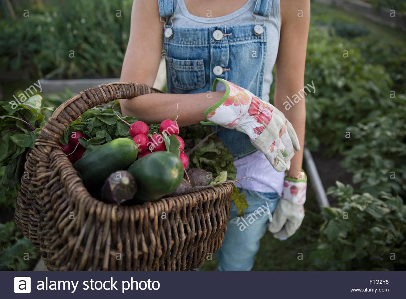 Close up woman holding fresh harvested vegetables basket - Stock Image