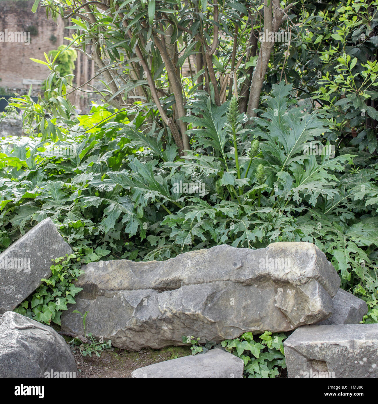 acanthus and remains of Roman buildings - Stock Image
