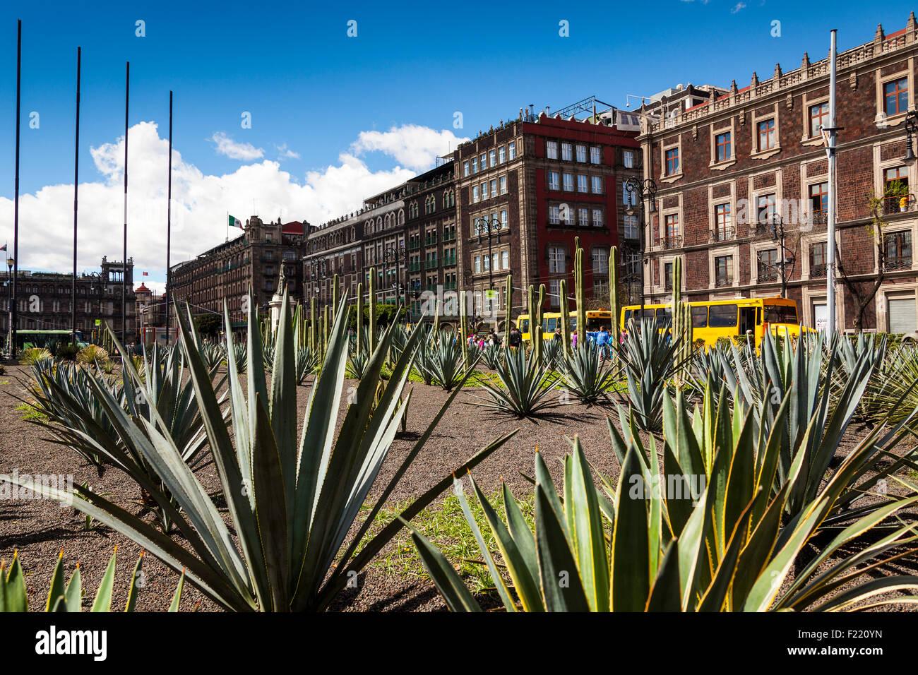 Agave garden Zocalo square Mexico City Federal District DF North America - Stock Image