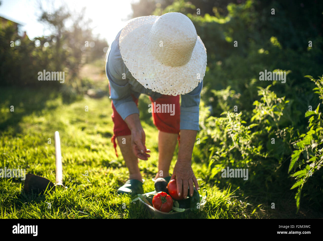 Senior woman with straw hat working in her garden - Stock Image