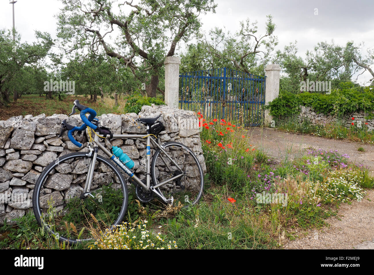 a-titanium-road-bike-leaning-against-a-stone-wall-in-front-of-an-olive-F2MEJ9.jpg