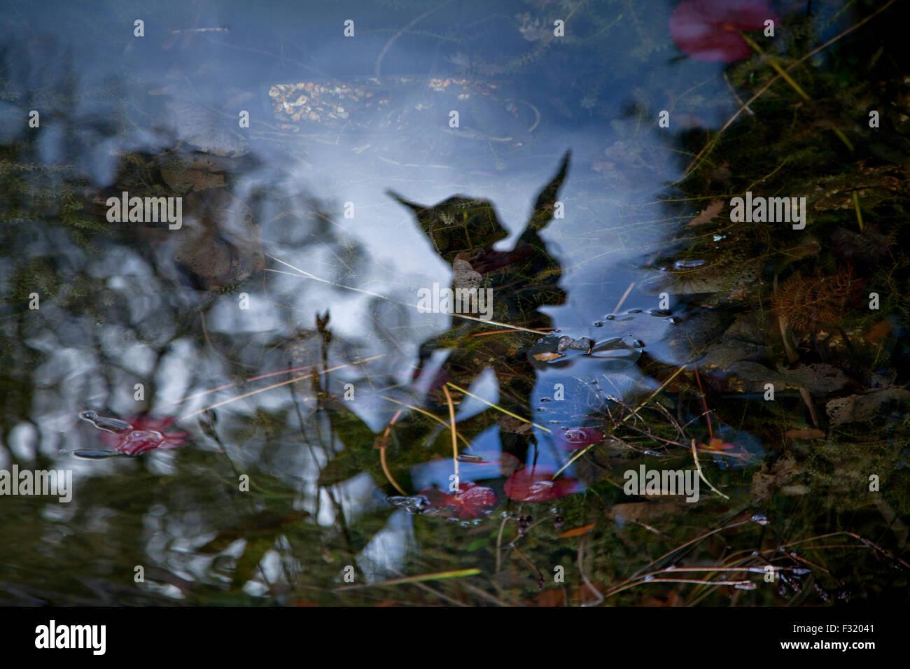 Fairy reflection - Stock Image