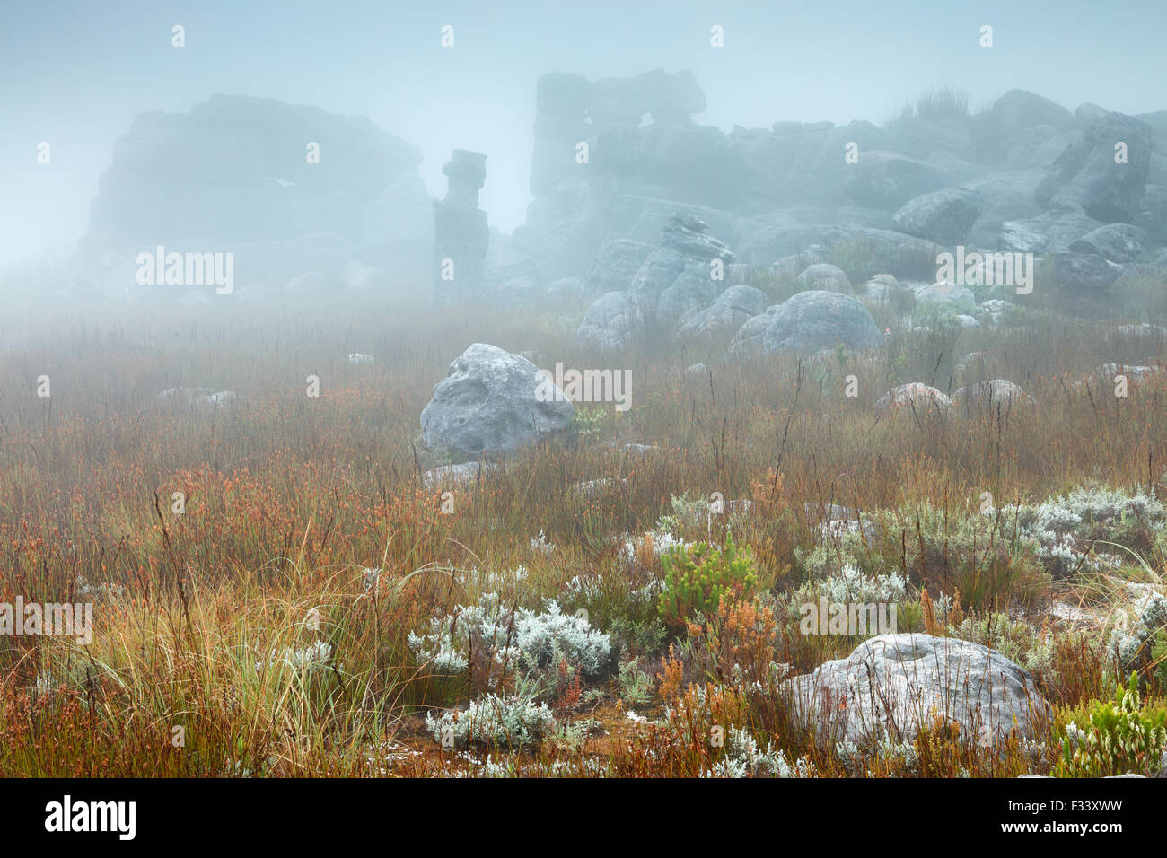 rocks and vegetation in the mist at dawn, Hottentots Holland Mountains, Western Cape, South Africa - Stock Image