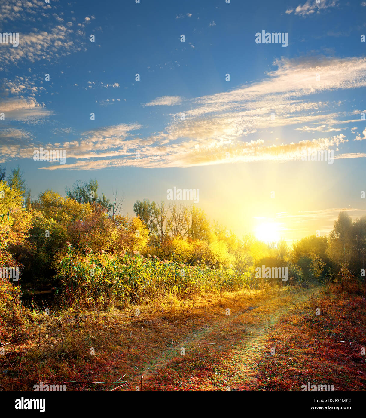 Country road in the colorful autumn forest - Stock Image