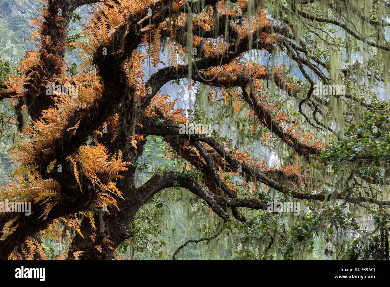 Forest around Tiger's Nest, Paro, Bhutan. Stock Photo