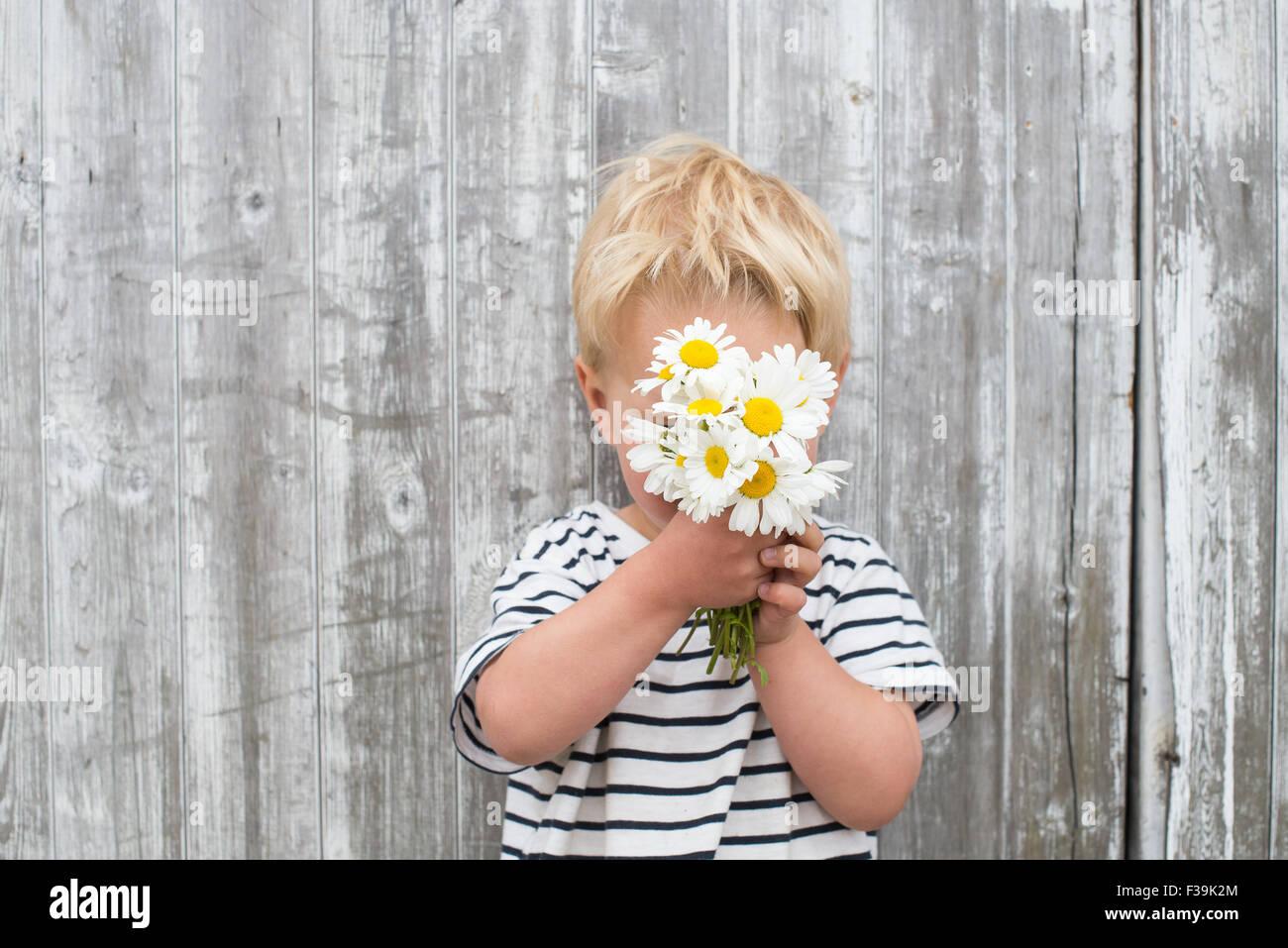 Boy hiding behind daisies - Stock Image
