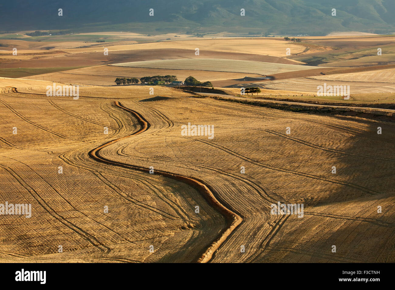 rolling farmland in the Overberg region near Villiersdorp, Western Cape, South Africa - Stock Image