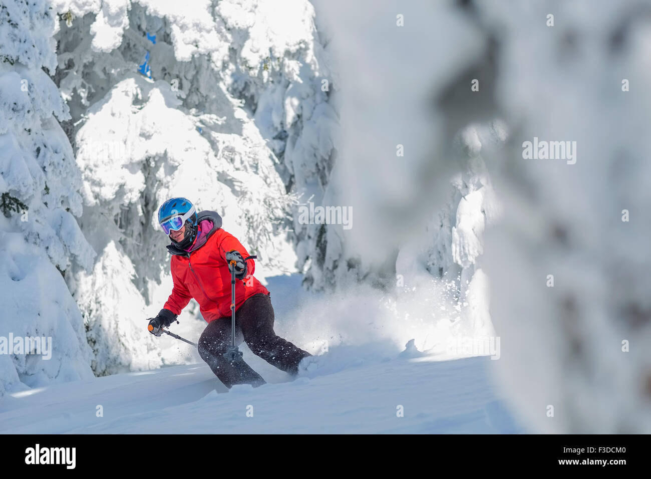 Mature woman skiing between trees covered with snow - Stock Image