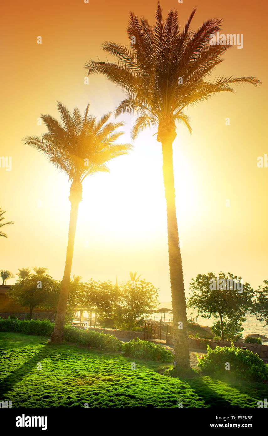 Tall palms in egyptian hotel at sunset - Stock Image