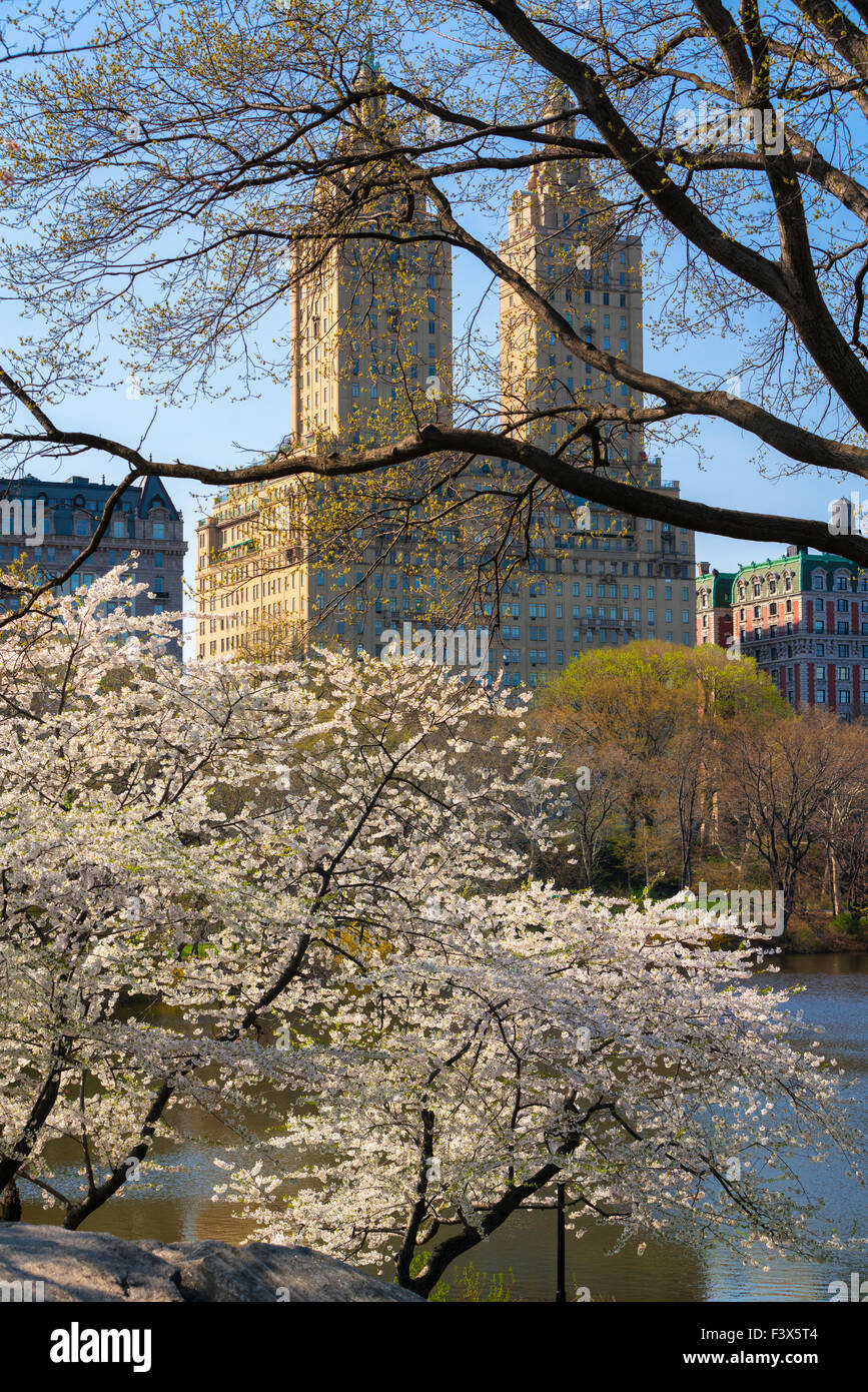 Spring in Central Park with blooming Yoshino Cherry trees. Upper West Side Manhattan, New York City. USA - Stock Image