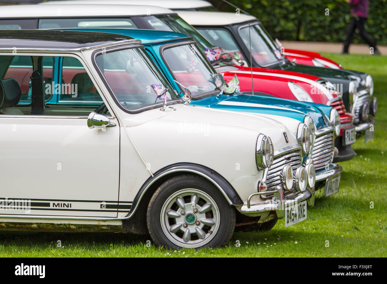 Morris Mini-Minors at a Mini rally in Northumberland, England - Stock Image
