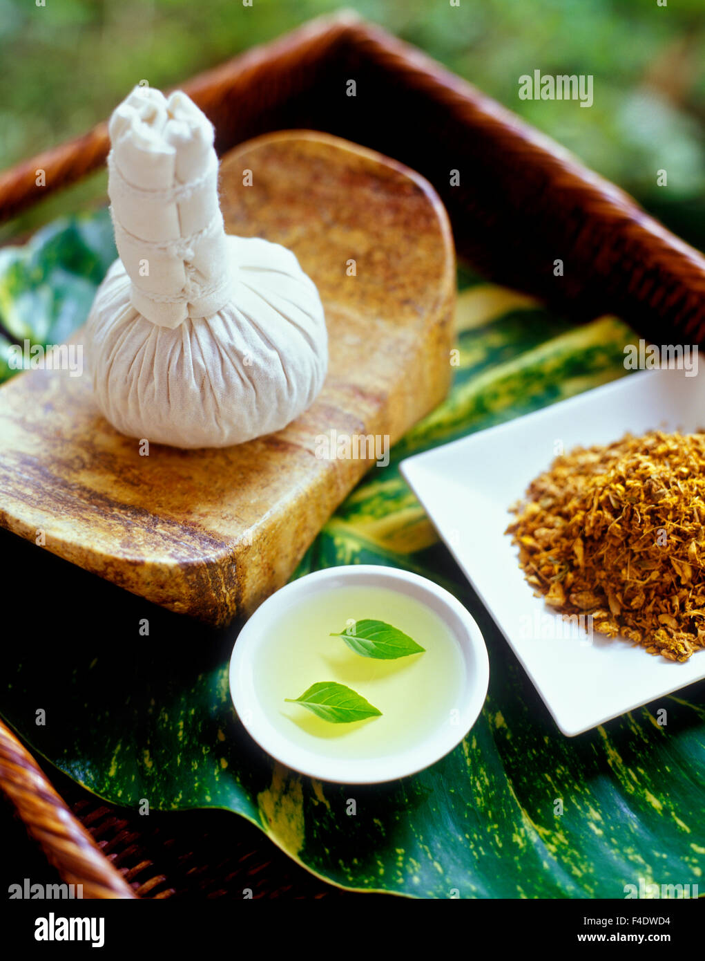 Ingredients for a hot poultice massage. Basil leaves in grape seed oil, and poultice.Riviera Maya,Yucatan,Mexico. - Stock Image