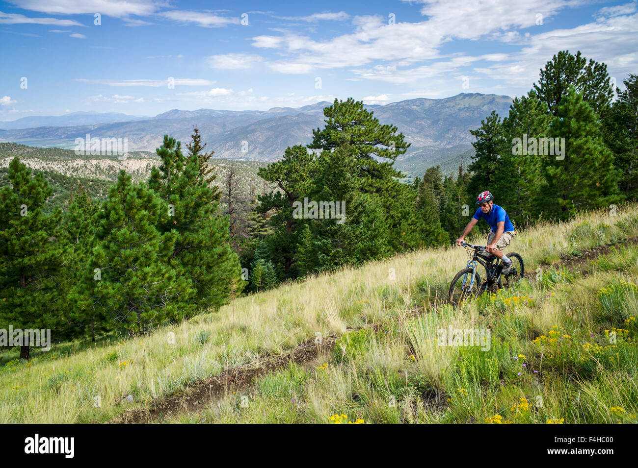 Male mountain bike rider on Little Rainbow Trail, near Bear Creek, Salida, Colorado, USA - Stock Image