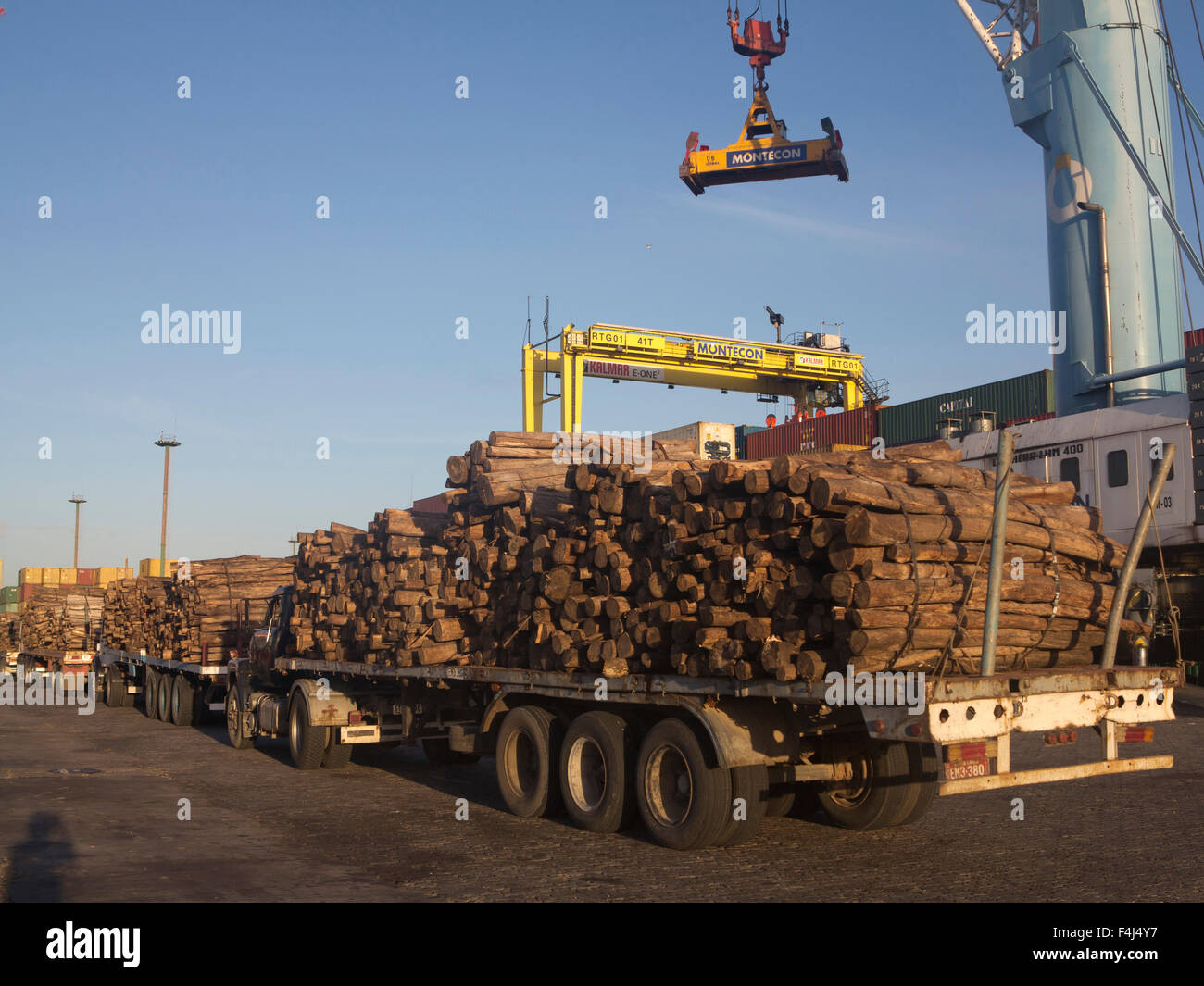Timber loaded for export at the harbour in Montevideo, Uruguay, South America - Stock Image