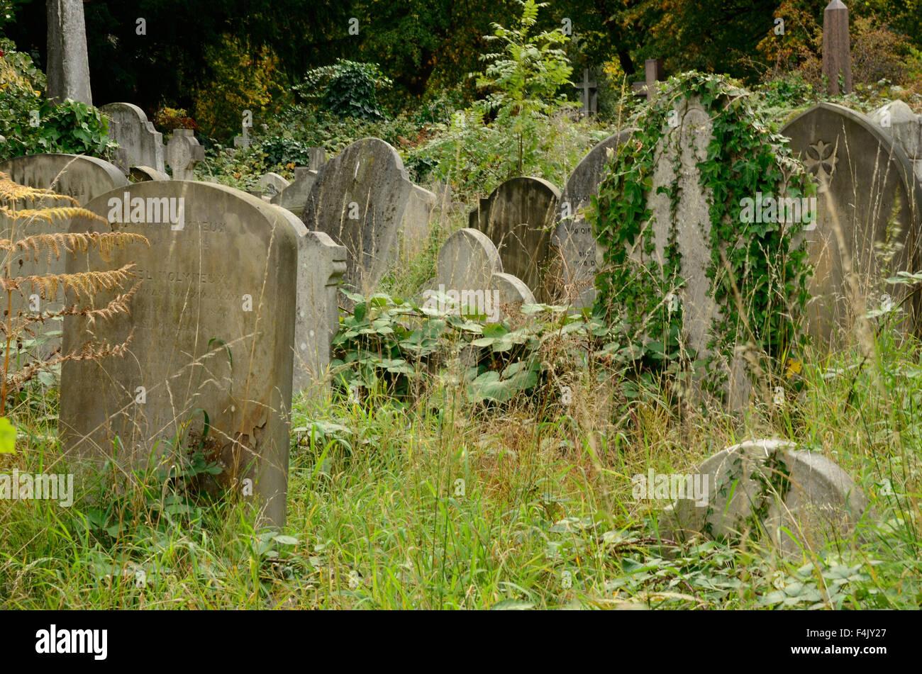 an-overgrown-graveyard-F4JY27.jpg
