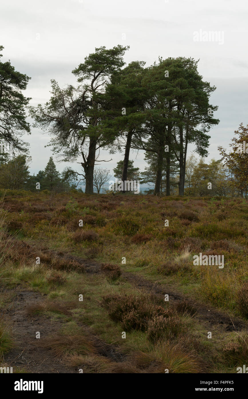 Site of Battle of Sheriffmuir looking North North West from near the Gathering Stone, Sheriffmuir,Perthshire,Scotland,UK, - Stock Image