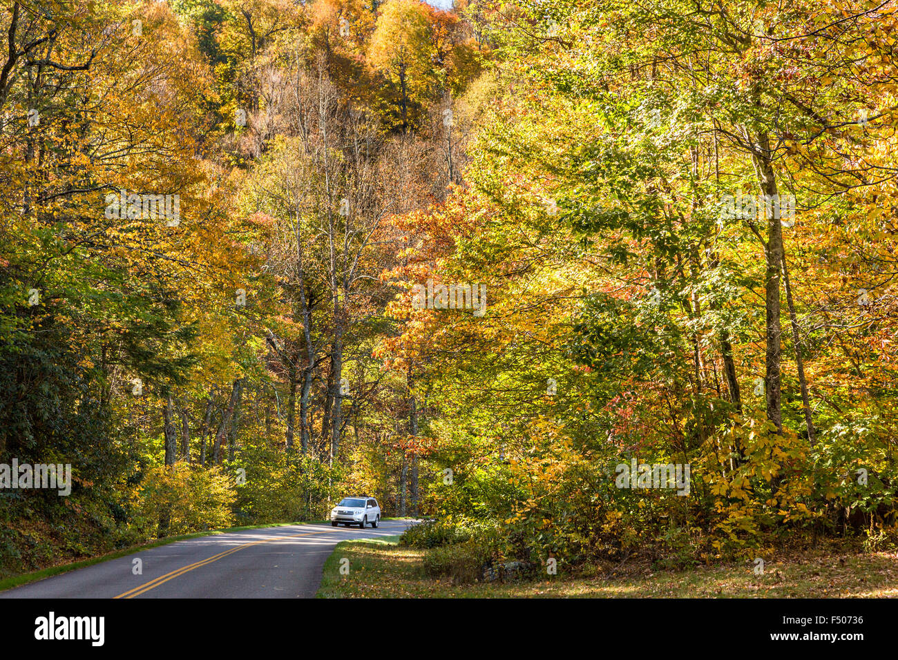 autumn foliage along the blue ridge national parkway outside stock