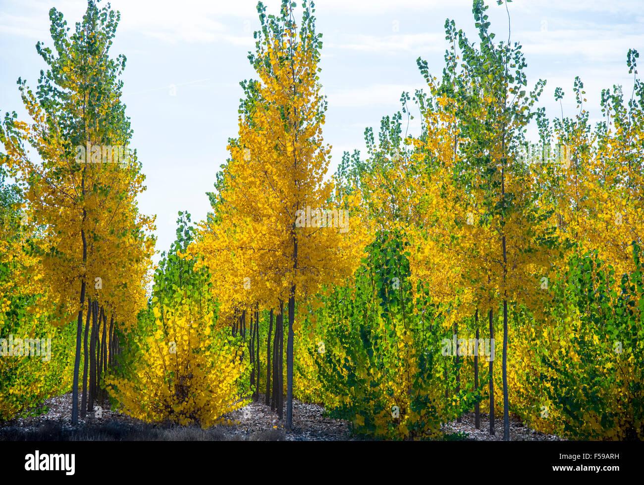 Boardman Tree Farm. Beautiful autumn colors shinning through Hybrid ...