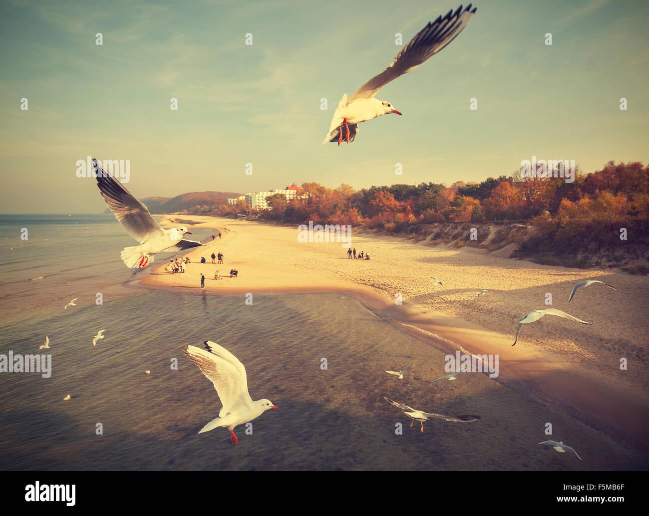 Vintage retro stylized birds above a beach, Baltic Sea, Poland. - Stock Image