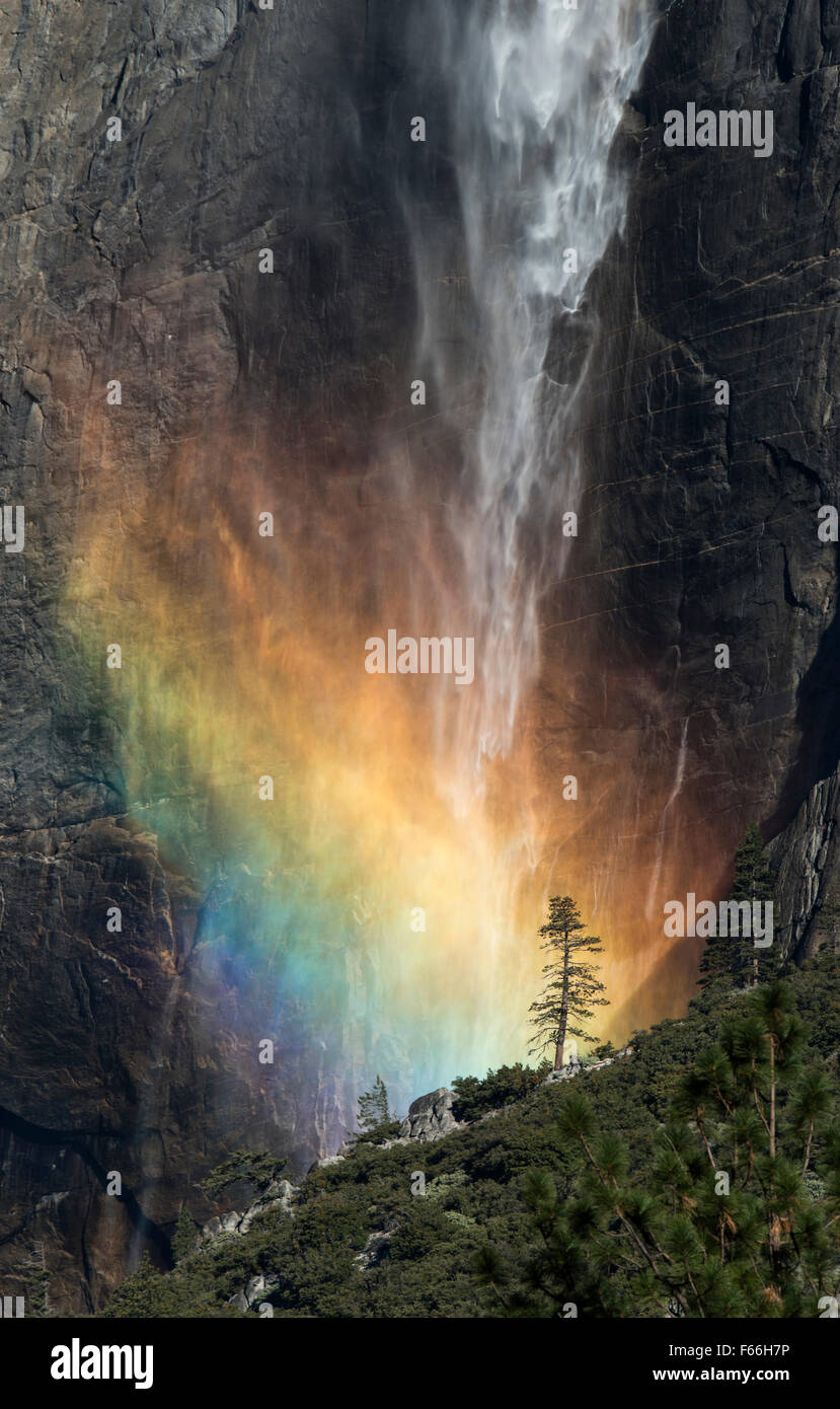 Upper Yosemite Falls With Rainbow Lone Tree - Stock Image