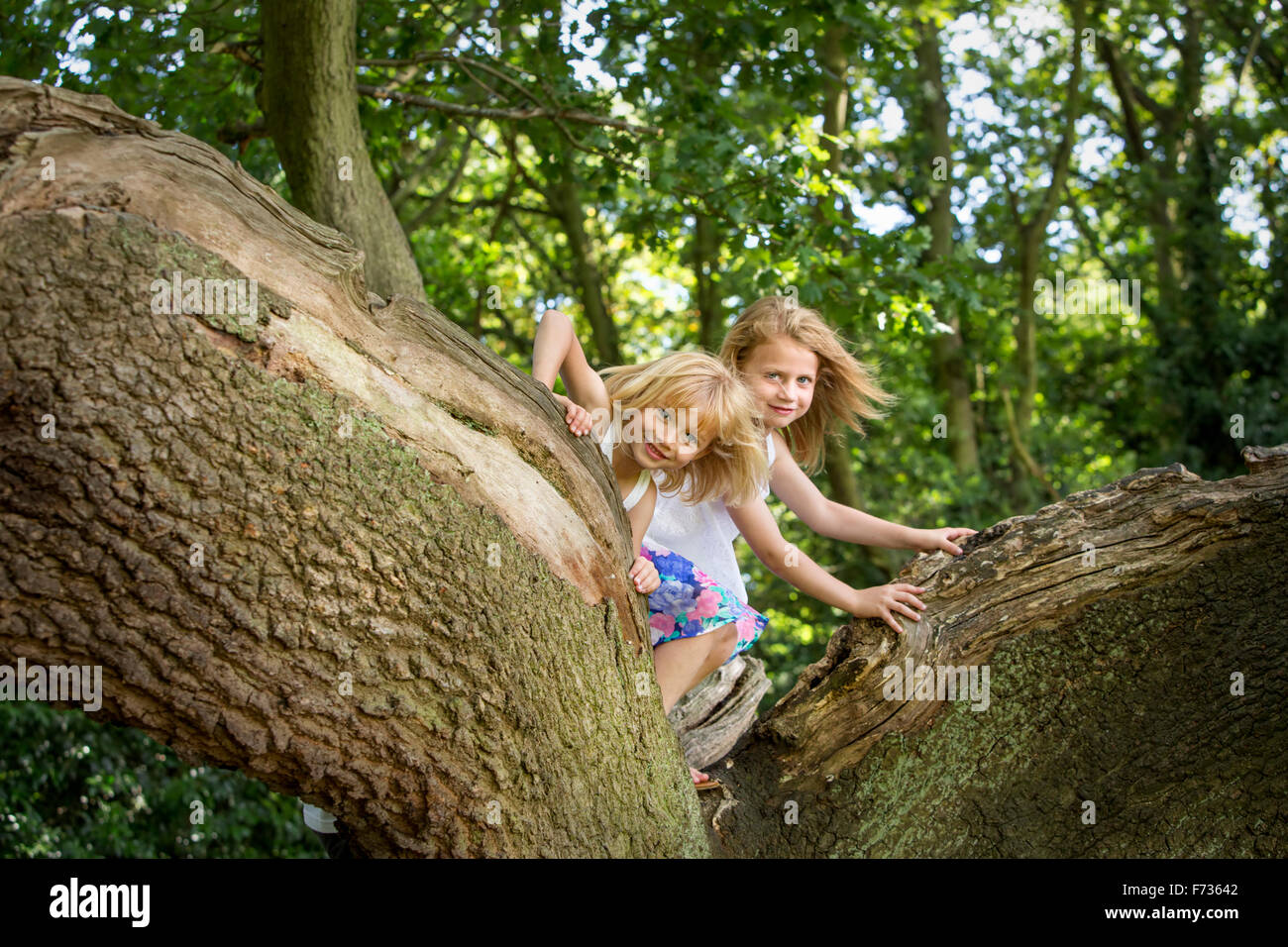 Two girls climbing a tree in a forest. - Stock Image