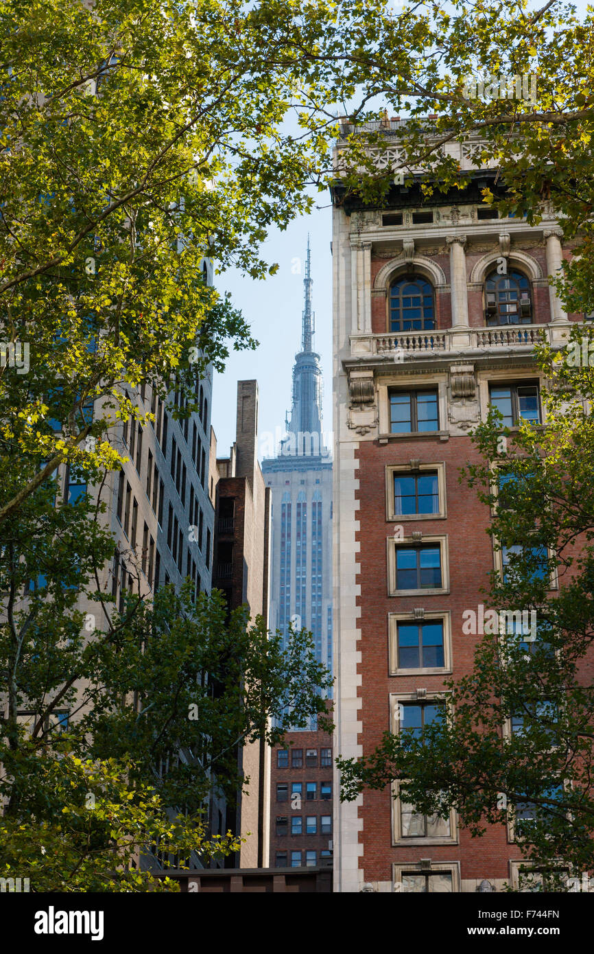 Summer in Midtown Manhattan, New York City with views on skyscrapers framed by london trees. - Stock Image