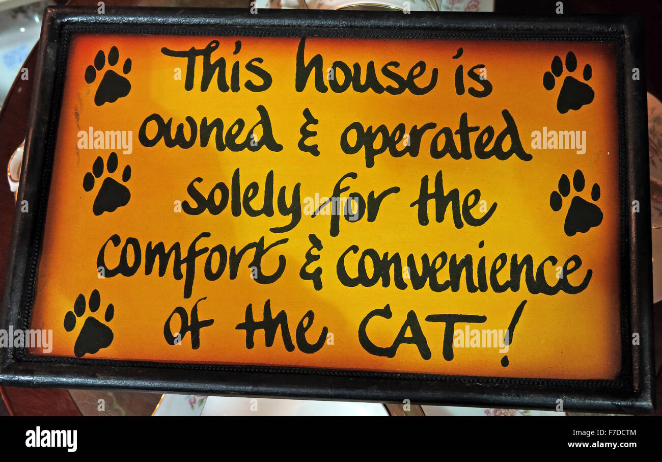 cats,feline,felines,sign,comfort,&,Convenience,of,the,cat,sign,signs,yellow,footprints,footprint,foot,print,paw,paws,joke,humour,laugh,laughing,humourous,GoTonySmith,Buy Pictures of,Buy Images Of