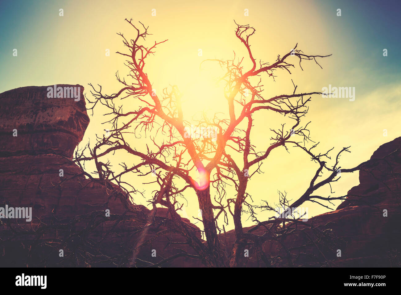 Vintage toned silhouette of a lonely dry tree at sunset, passing of time concept picture. - Stock Image