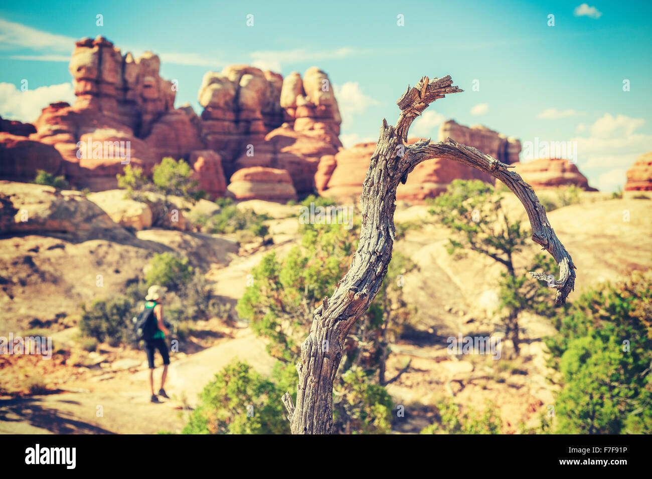 Old film stylized dry tree by trekking trail, shallow depth of field. - Stock Image
