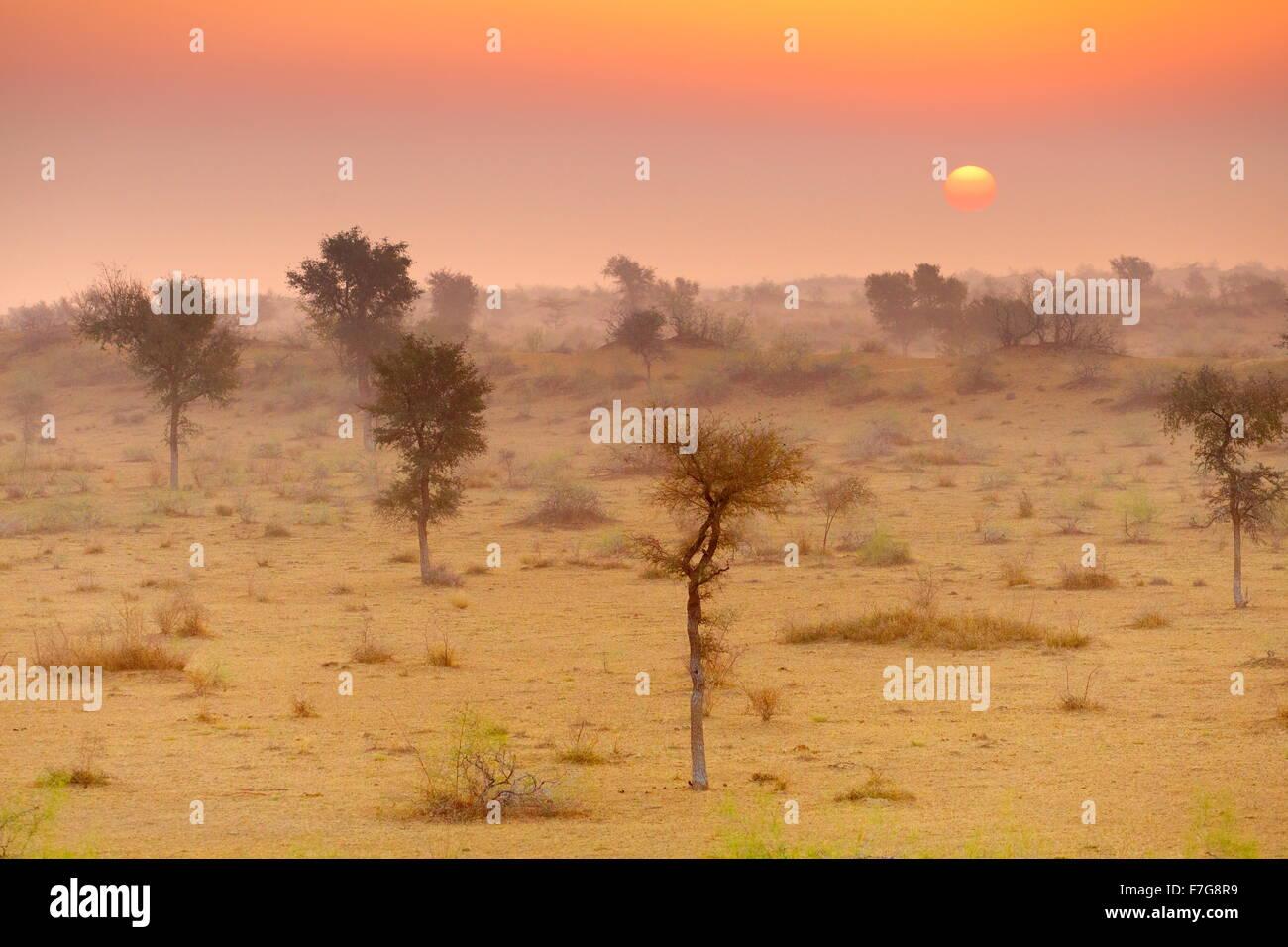 Sunrise in Thar desert near Jaisalmer, Rajasthan, India - Stock Image