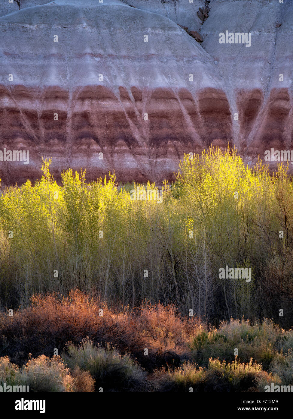 Cottonwood trees and colorful cliffs. Capitol Reef National Park, Utah - Stock Image