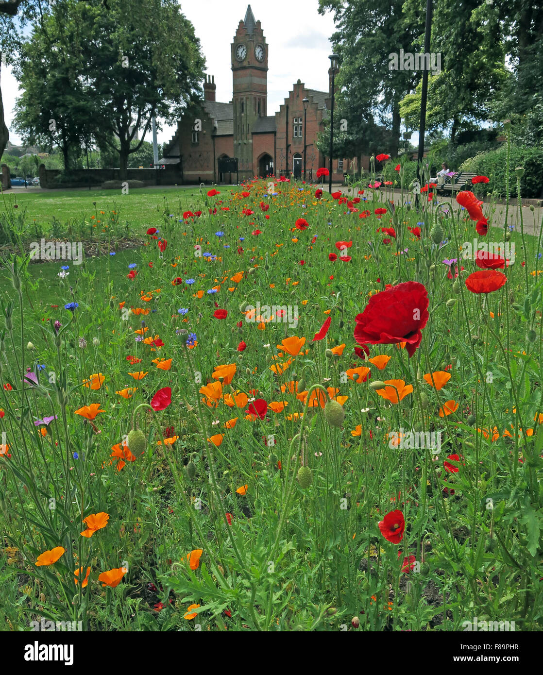 Welcome,to,English,Tree,Trees,collection,wild,flowers,public,space,Arbo,GB,UK,United,Kingdom,saddlers,sadler,MBC,Borough,Council,Victorian,park,park,entrance,clock,tower,lake,sign,flower,bed,town,Walsall Arboretum,West Midlands,Public spaces,Victoria Park,flower bed,GoTonySmith,West,Midlands,England,WS4,2BU,tourist,tourism,travel,to,Black,Country,Buy Pictures of,Buy Images Of,Lichfield St,WS4 2BU,Black Country,Walsall Black Country