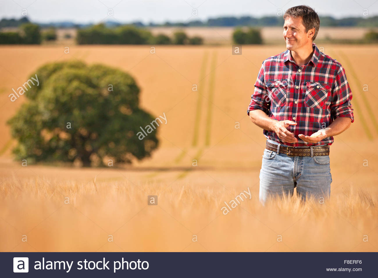 Farmer looking away in sunny rural barley crop field - Stock Image